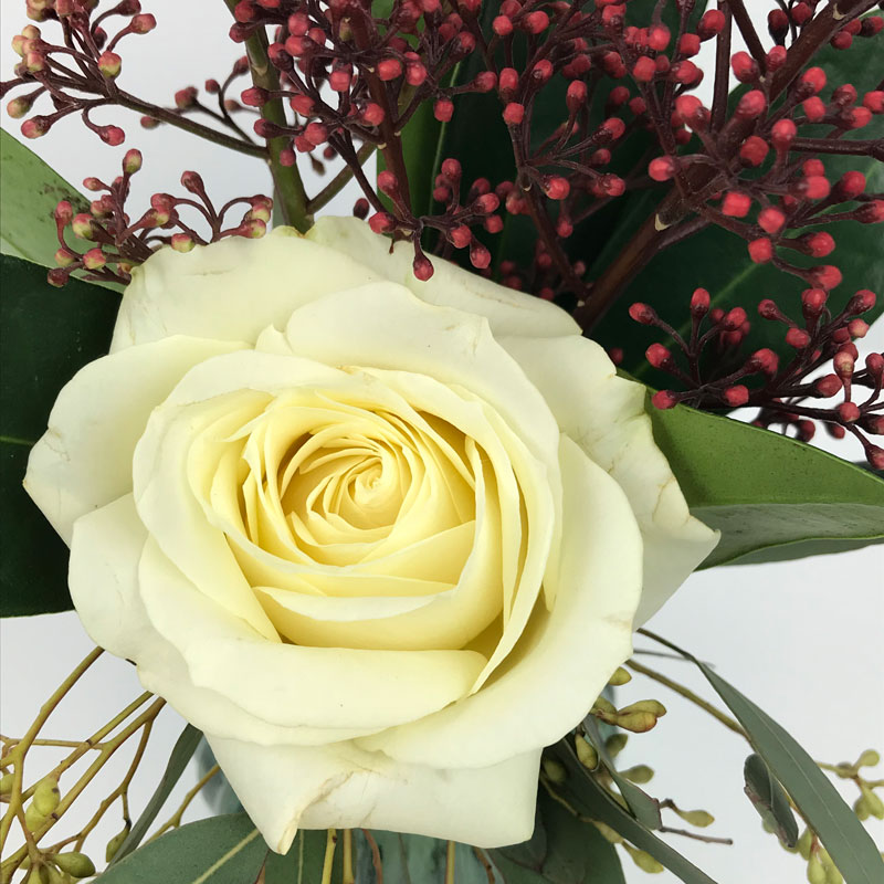 rose69.jpg