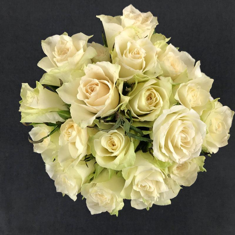 rosen235.jpg