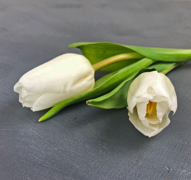 tulp-wei16.jpg