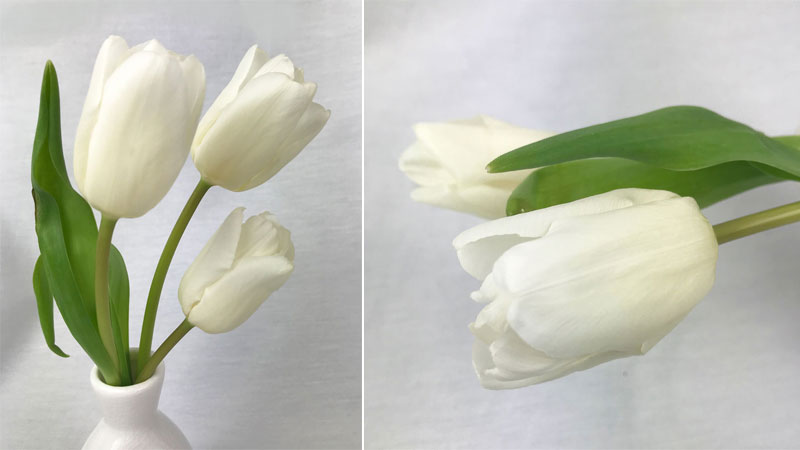 Als Erstes Habe Ich Die Stiele Angeschnitten Und Die Blumen Nach Ihrer  Länge Sortiert, Denn Ich Möchte Eine Kleine Deko Für ...