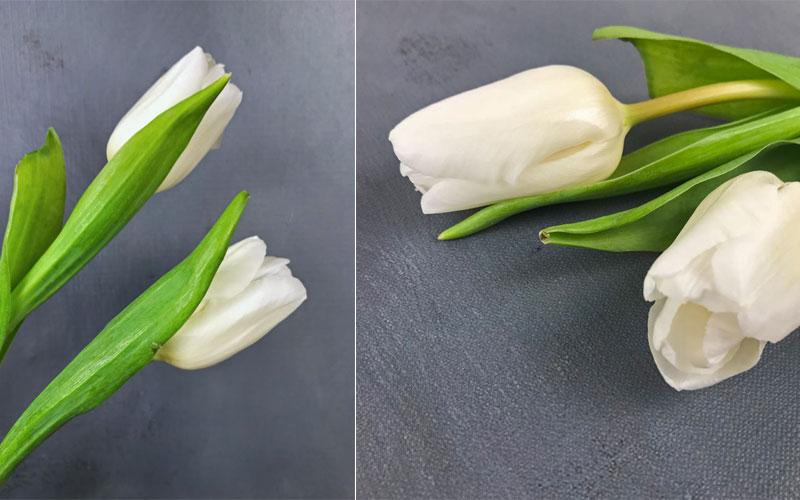 tulpen-coll4.jpg