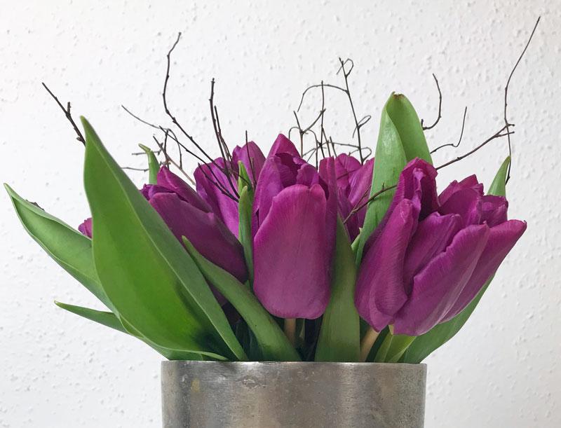 tulpen16.jpg