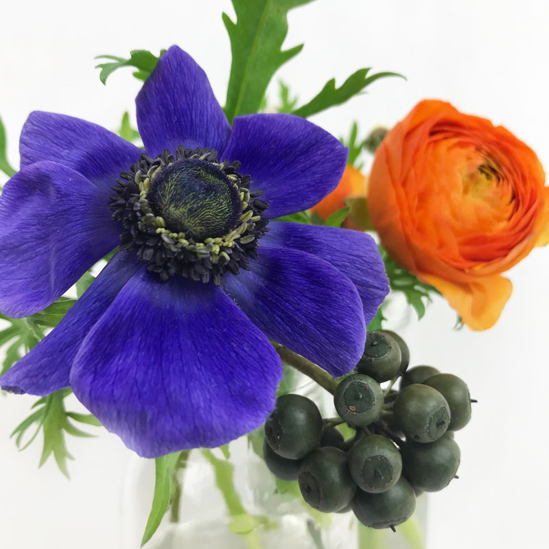 aneom-blau11.jpg