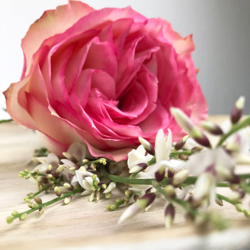 rose91.jpg