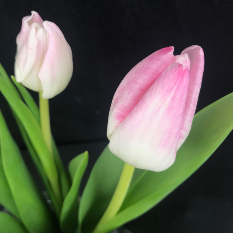 rose-tulps49.jpg