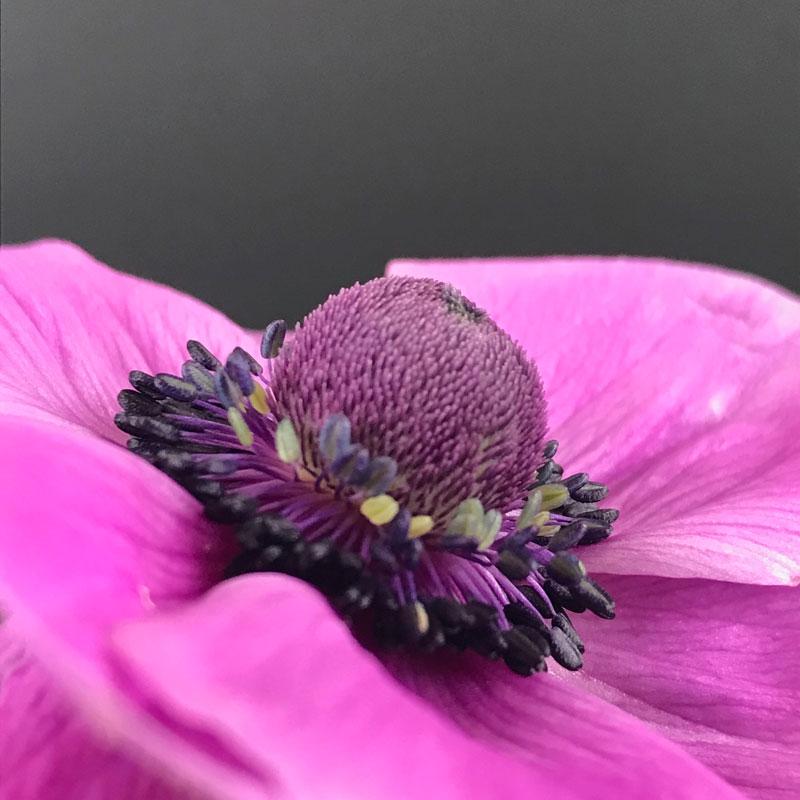 anemone103.jpg
