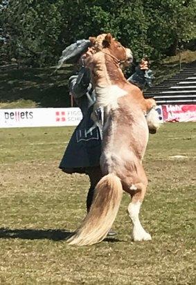 pferd12
