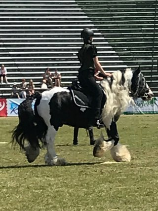 pferd14