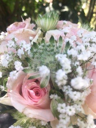 rosen25.jpg