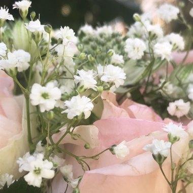 rosen35.jpg