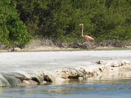 ein flamingo...