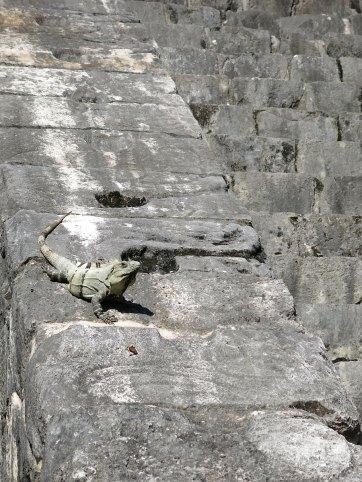 Iguana dürfen übrigens hoch ....