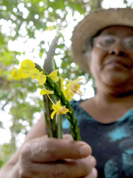 Maria und ihre Mini-Orchideen