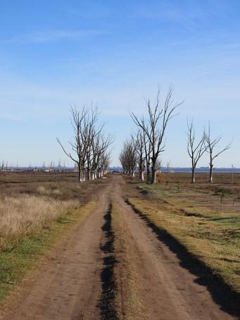 Eine Allee aus toten Bäumen ist unser Empfangskomitee auf dem Friedhof.