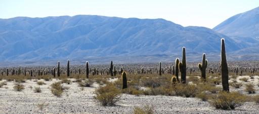 Ein Kaktusgarten