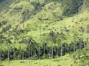 Ein Palmenwald