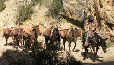 Ein Cowgirl ... oder eher Mulegirl?!