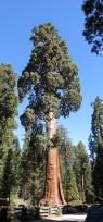 sequoia_02_08