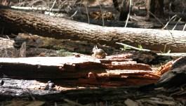 sequoia_02_13