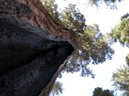 sequoia_02_14