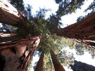 sequoia_02_17