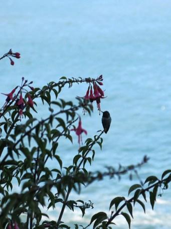 alcatraz_view_02