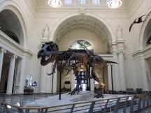 Sue, der sympathische T-Rex von nebenan