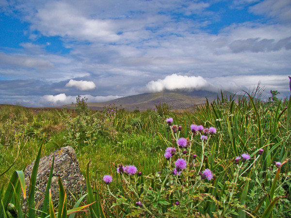 Ben More with Thistles (so Scotish!)