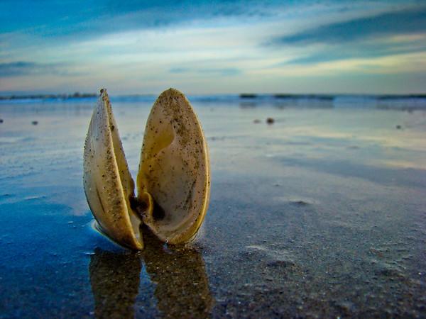 Monumental Shell