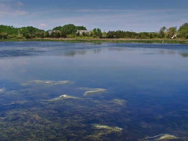 Pond with Polen