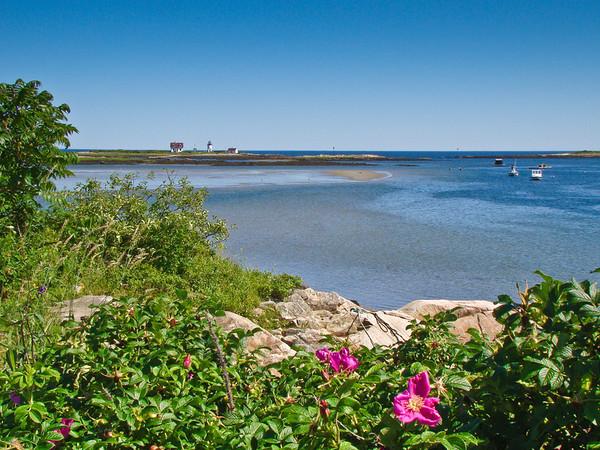 Goat Island Light: Over Rose