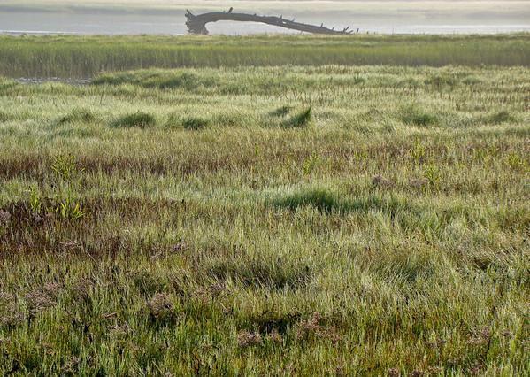 Morning Marsh Meadow