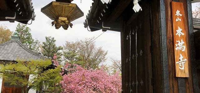 Along Tera-machi Street, let's find cherry blossoms.