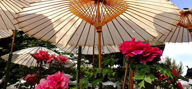 The combination of peony and umbrella is splendid. Otokuni-dera Temple.