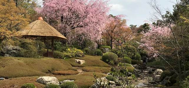 Taizo-in Temple : Beautiful garden and Cherry Blosssoms.