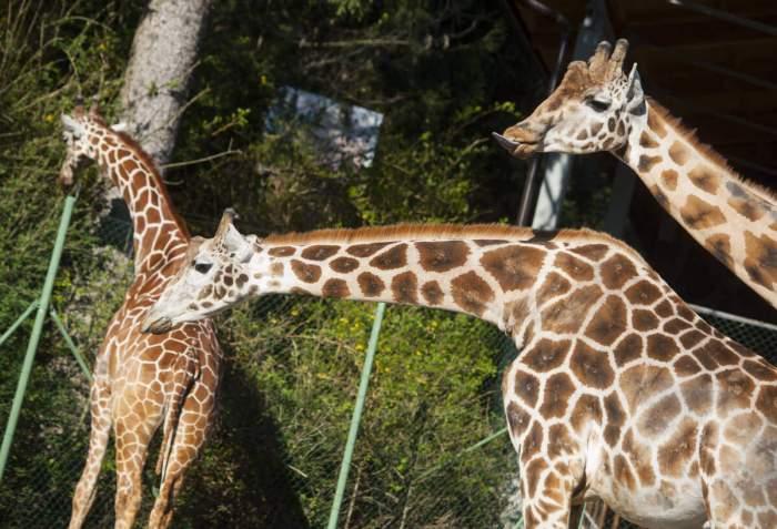 Зоопарк Любляны Словения