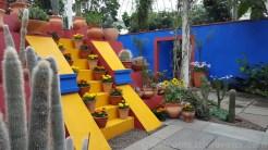 La Casa Azul Garden inside the conservatory.