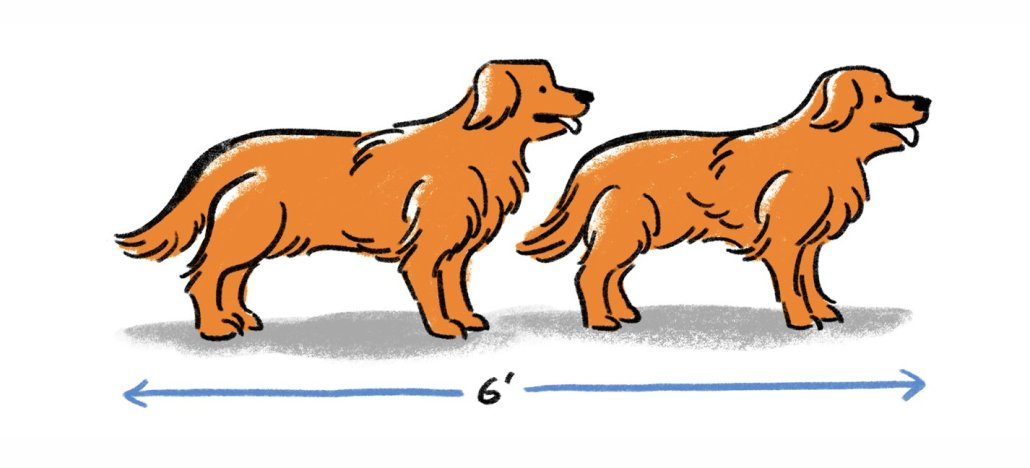Two dogs demonstrating the length of 2 metres