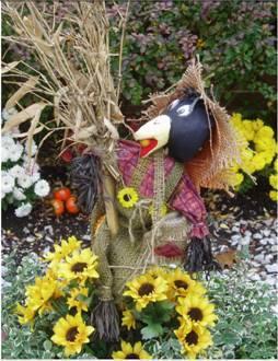 Thansgiving Crow