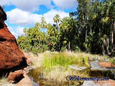 palmvalley2