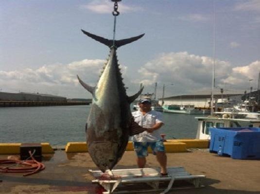 Tony's Tuna