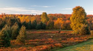 This is a photo of a fall forest by Stephen Desroches