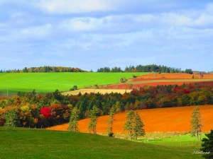 Fall fields in Prince Edward Island
