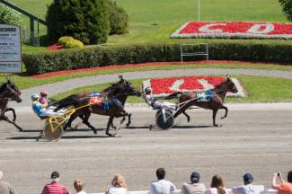 Harness Racing at Red Shores
