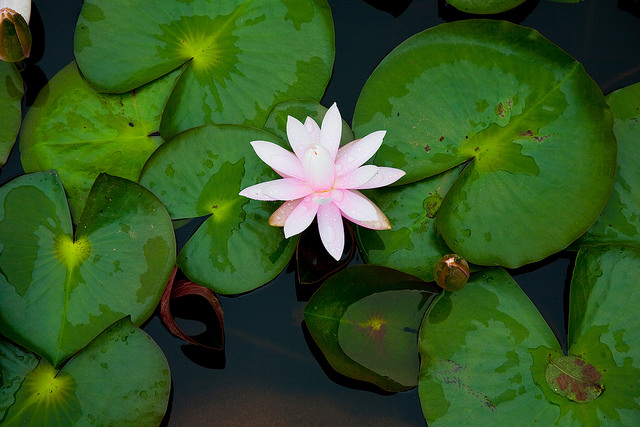 Lily Pond - Photo by Stephen Harris ©Tourism PEI