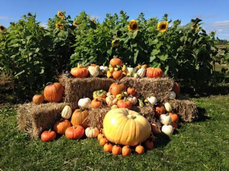 Pater's Pumpkins