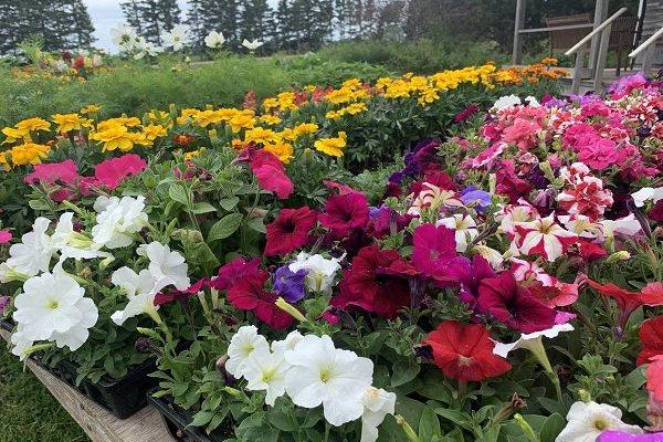 Island Pride Garden Co