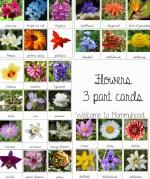 Flowers 3 part cards