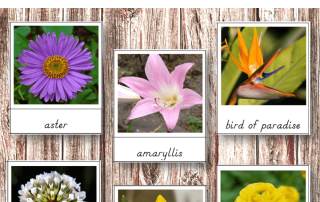 Use these Montessori Flowers 3 Part Cards to teach children about different types of flowers. They will be so interested to see some of the different colors and types of flowers that exist in the world!