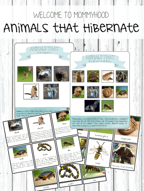 Montessori Hibernation Printables